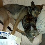 Best friends furr-ever! Cat and dog sleeping together on a chair.